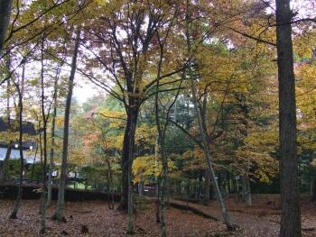 追分公園紅葉2.jpg