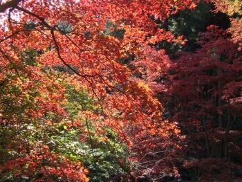 東郷公園紅葉4.jpg