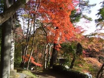 東郷公園紅葉5.jpg