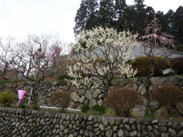 天沢院(青梅)2.jpg