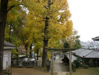 八幡宮(田端)紅葉2.jpg