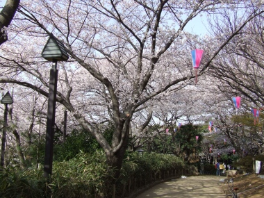 飛鳥山公園の桜3.jpg