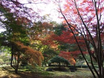 芭蕉公園紅葉2.jpg