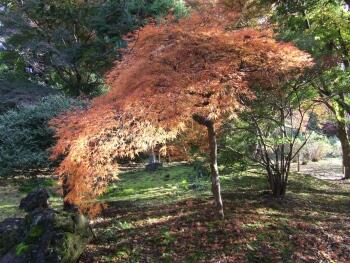 芭蕉公園紅葉1.jpg