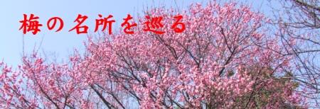 梅の名所.jpg