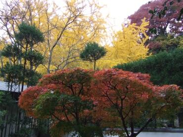 報国寺_竹の庭園3.jpg