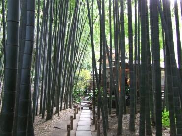 報国寺_竹の庭園2.jpg
