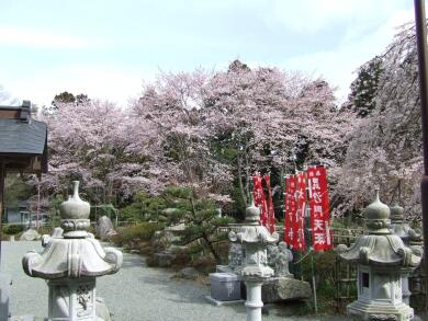 宝泉寺桜2.jpg