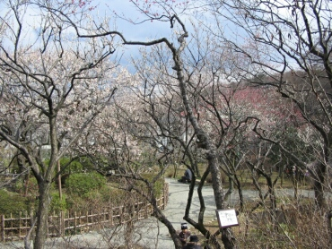 百草園の梅2.jpg
