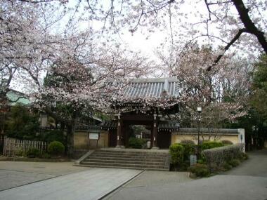法明寺桜2.jpg