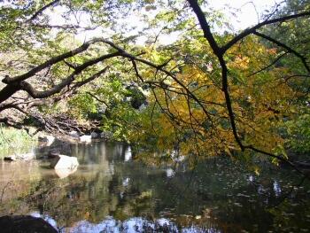 名主の滝公園_東京観光名所2.jpg
