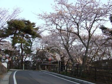 勿来の関桜1.jpg