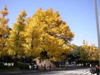 北の丸公園_東京紅葉の名所3.jpg