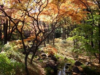 北の丸公園_東京紅葉の名所1.jpg