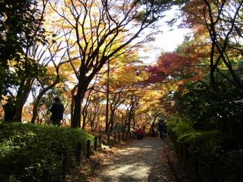 北の丸公園_東京紅葉の名所2.jpg