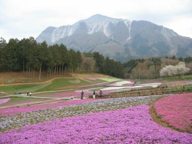 羊山公園ナ桜.jpg