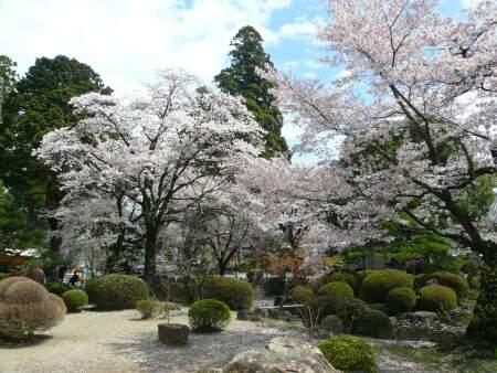 恵林寺 桜.jpg