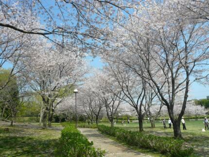 絹の台桜公園1.jpg
