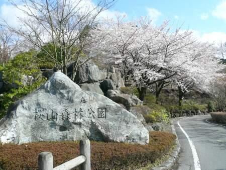 桜山公園の桜 石碑.jpg
