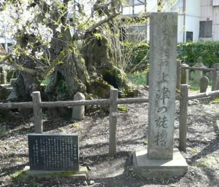 上津の姥桜 石碑.jpg