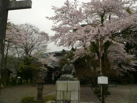 清河神社 桜2.jpg