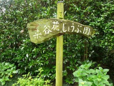 染谷花しょうぶ園.jpg