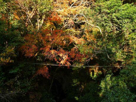 かじか橋の紅葉4.jpg