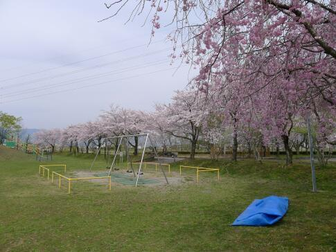 さいがわ公園2.jpg