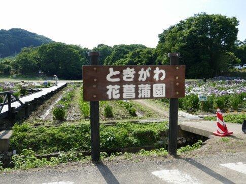 ときがわ菖蒲園.jpg