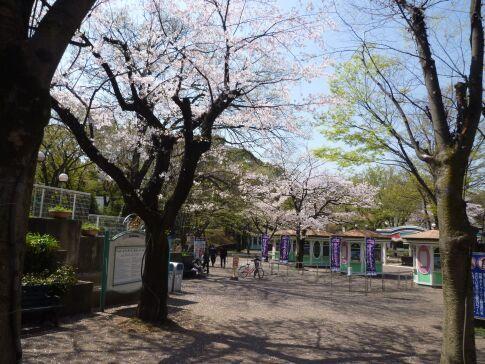 としまえんの桜2.jpg