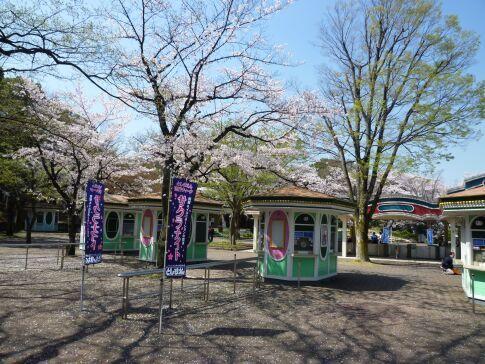 としまえんの桜3.jpg