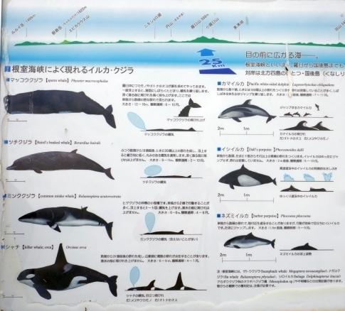 クジラの見える丘公園2.jpg