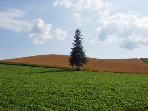 クリスマスツリーの木.jpg