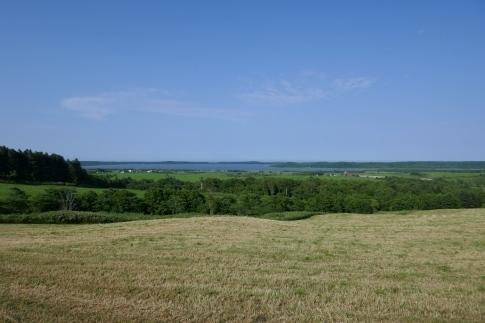 クローバーの丘4.jpg