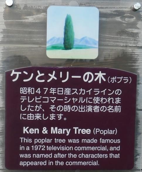 ケントメリーの木4.jpg