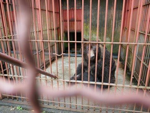ポロトコタン 熊.jpg
