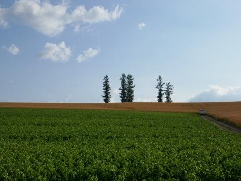 マイルドセブンの丘2.jpg