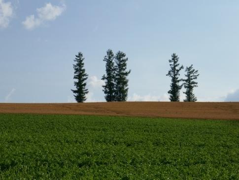 マイルドセブンの丘3.jpg