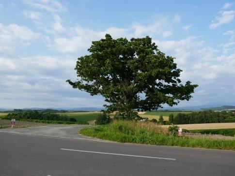 マイルドセブンの木.jpg