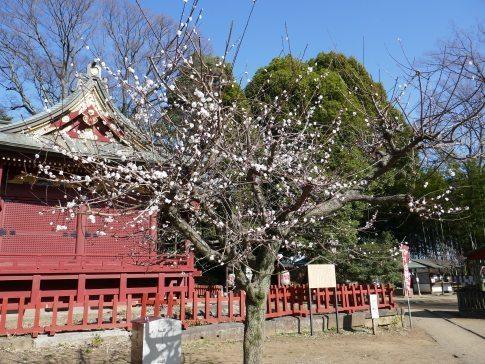 三芳野神社2.jpg