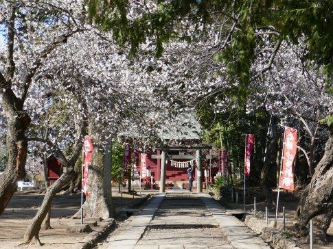 三芳野神社4.jpg