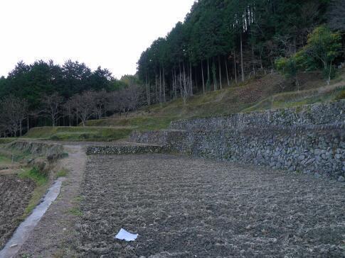 上稲子の棚田3.jpg