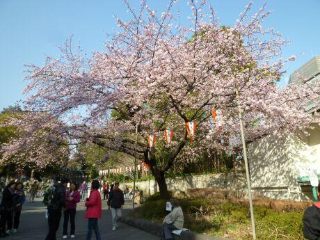 上野公園の寒桜.jpg