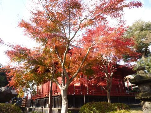 上野公園の紅葉.jpg