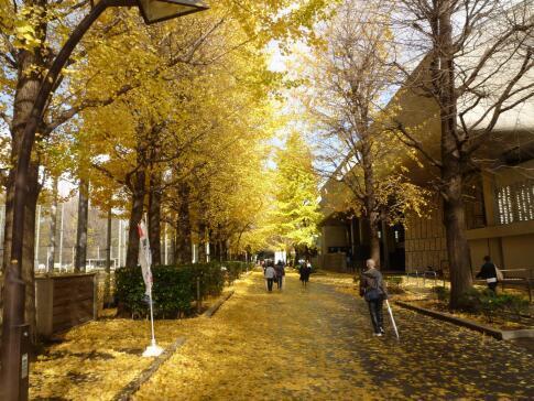 上野公園の紅葉3.jpg