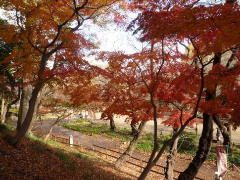 上野公園の紅葉6.jpg