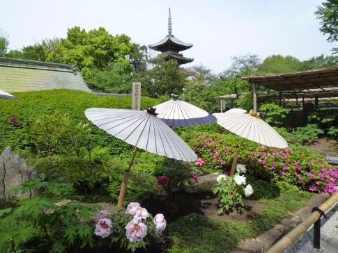 上野東照宮ぼたん園2.jpg