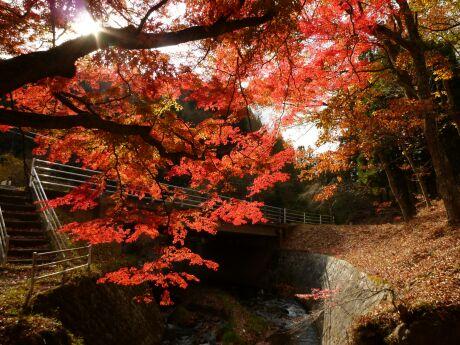 下滝不動の紅葉3.jpg