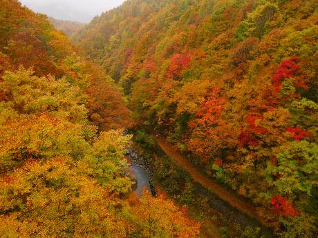 中津川橋からの紅葉1.jpg