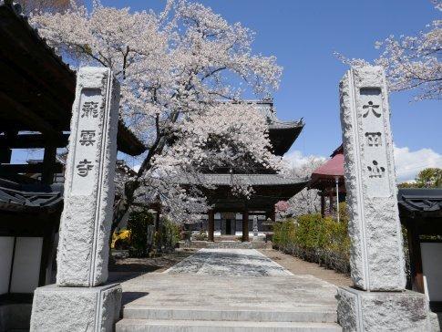 佐久 龍雲寺 桜2.jpg